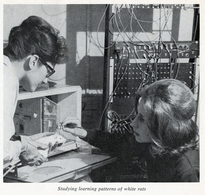 Two students studying a white rat in a psychology lab